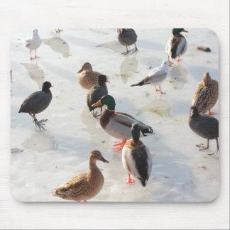 ice ducks mousepads