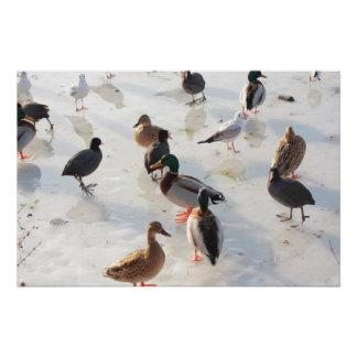 ice ducks poster