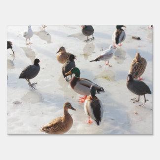 ice ducks sign