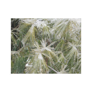 Ice on White Pine Wrapped Canvas Canvas Print