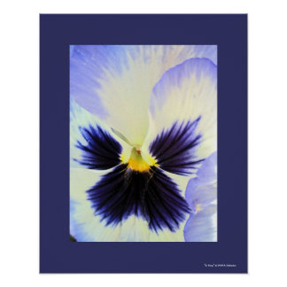 Ice Pansy Poster