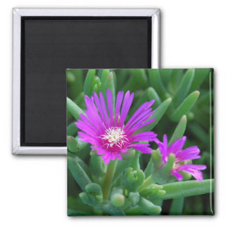 Ice Plant 2 Inch Square Magnet