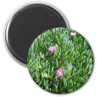 Ice Plant 3 Blooms Magnet