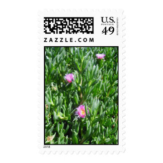 Ice Plant 3 Blooms Postage Stamp