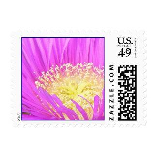 Ice Plant Bloom Postage Stamp