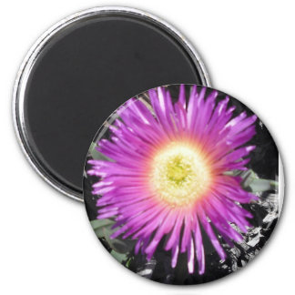 Ice Plant Close Up Magnet