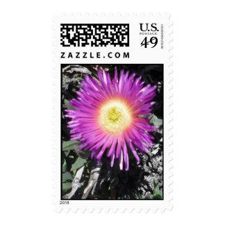 Ice Plant Close Up Stamp