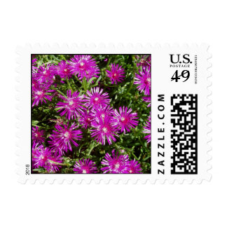 Ice plant postage stamp