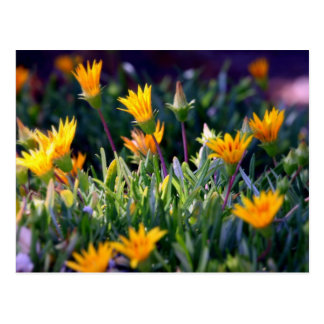 Ice Plant Post Cards