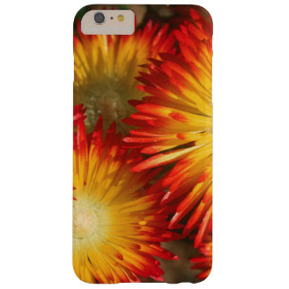 Ice Plants (Lampranthus Aureus) In Bloom Barely There iPhone 6 Plus Case