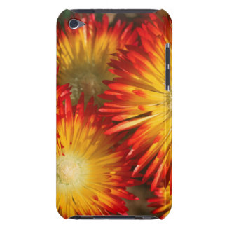 Ice Plants (Lampranthus Aureus) In Bloom iPod Touch Cover