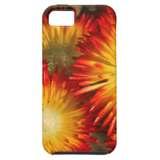 Ice Plants (Lampranthus Aureus) In Bloom iPhone SE/5/5s Case