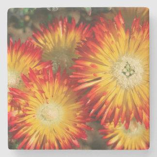 Ice Plants (Lampranthus Aureus) In Bloom Stone Coaster