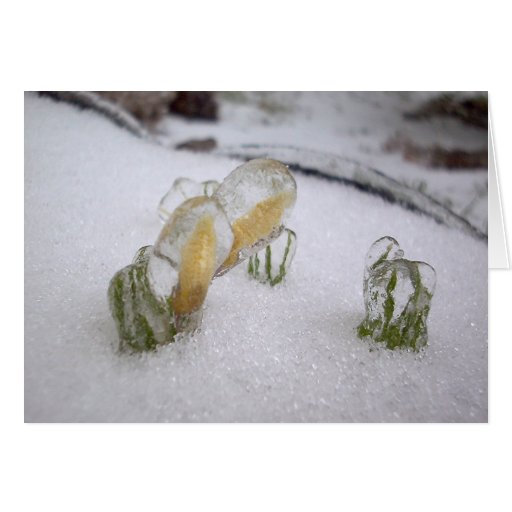 Ice Storm 2003 Greeting Card