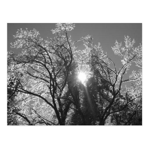 Ice Tree Postcard