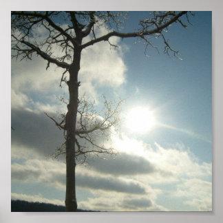 Ice/Tree Sunny Tree Poster