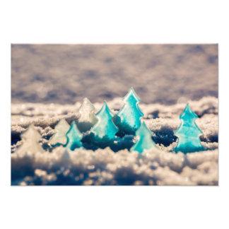 Ice trees photo