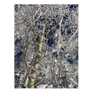 Ice Trees Postcard