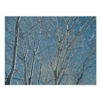 Ice Trees Posters