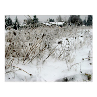 Ice Weeds Postcard