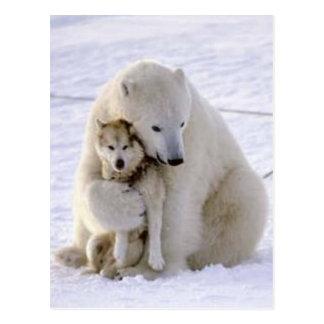Icebear and Dog Post Cards