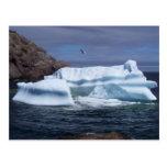 Iceberg & Gull Postcard