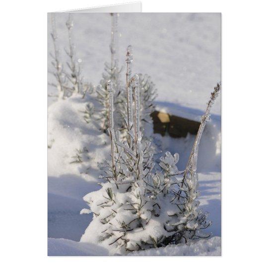 Iced fir tree with snow card