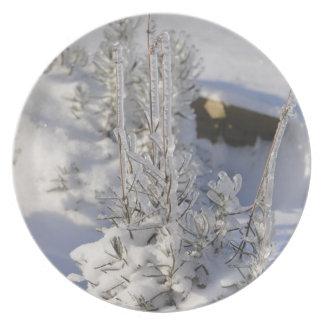 Iced fir tree with snow dinner plate