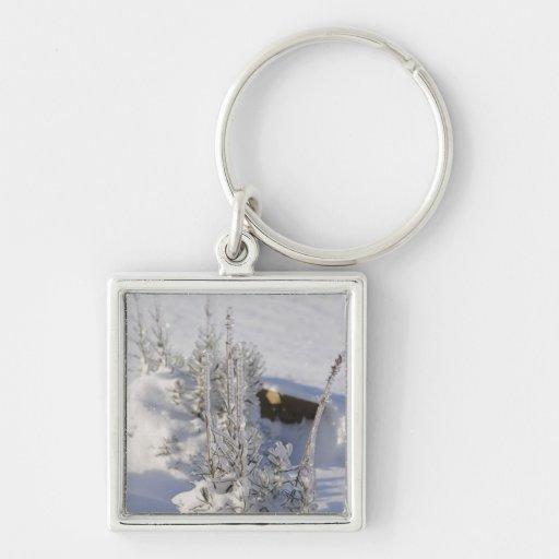 Iced fir tree with snow keychains
