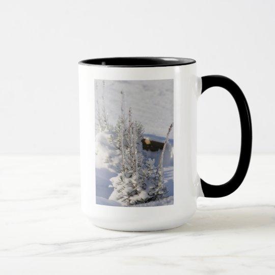 Iced fir tree with snow mug