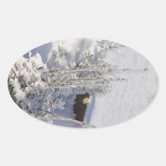 Iced fir tree with snow oval sticker