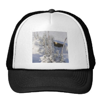Iced fir tree with snow trucker hat