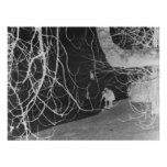 Iced Lake Thru Tree Branches in Negative Posters
