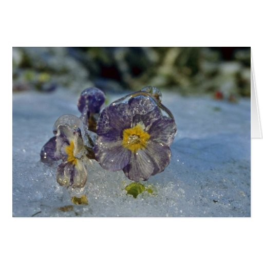 Iced periwinkle Pink flowers Card