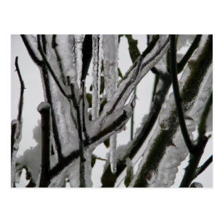 Iced Rose Branches Postcard