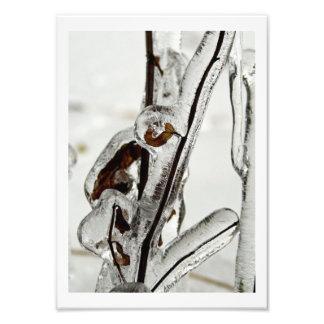 Iced Stems Photo Print