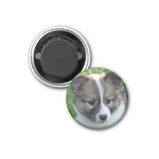 Iceland dog puppy refrigerator magnets