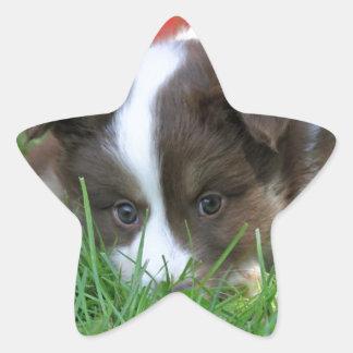 Iceland dog star sticker