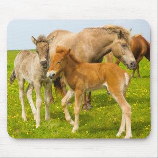 Iceland. Dyrholaey. Icelandic horse foals Mouse Pad