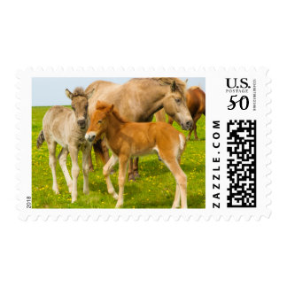 Iceland. Dyrholaey. Icelandic horse foals Postage