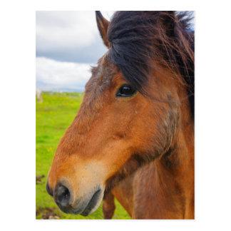 Iceland. Eyrarbakki. Icelandic horse Postcard