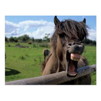 Iceland horse, Icelander Postcard