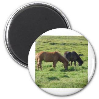 Iceland horses 2 inch round magnet