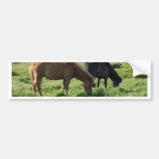 Iceland horses bumper sticker