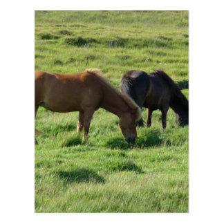 Iceland horses postcard