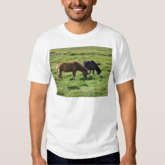 Iceland horses tee shirt