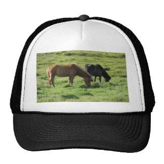 Iceland horses trucker hat