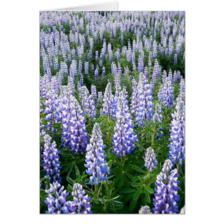 Iceland lupins card