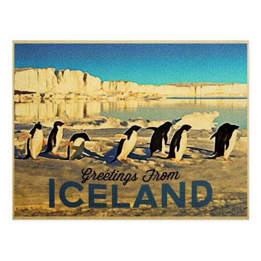 Iceland Penguins Postcard
