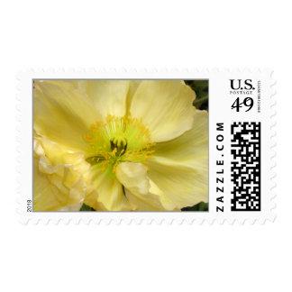 Iceland Poppy Wedding Flower Postage Stamps